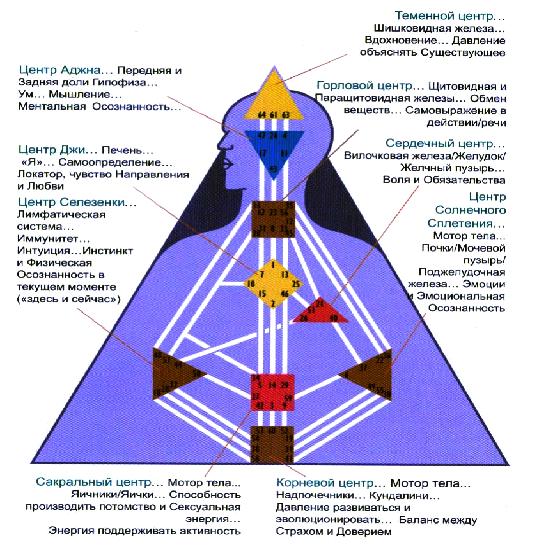 Дизайн человека селезеночный центр